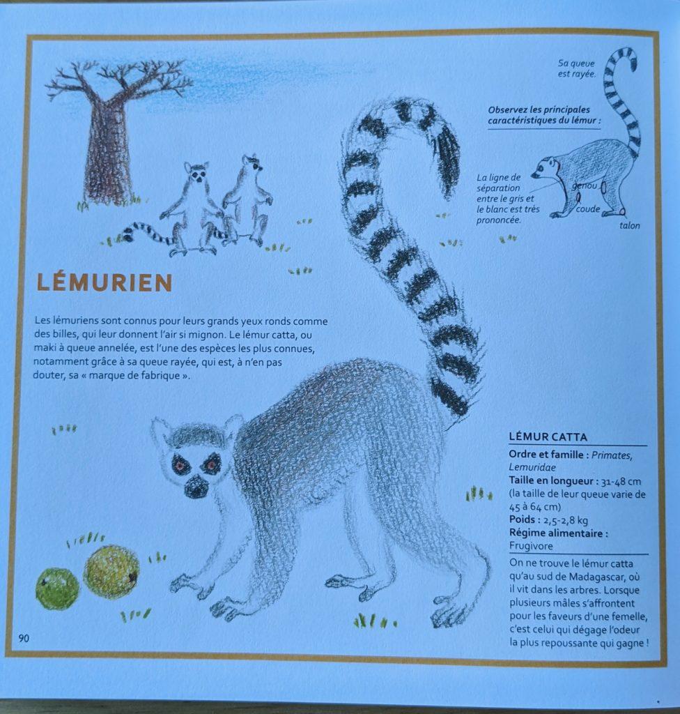 livre dessiner des animaux supermignons - lemurien